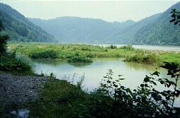 Donau_rohrbach_biotop4