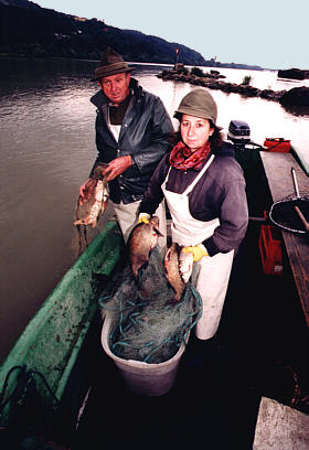 Fische, die Steckerlfisch werden