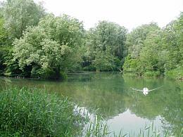 Hagenauer Bucht