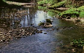 Krems seichtes Wasser