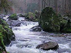 Rodl mit ein paar Felsen im Bach