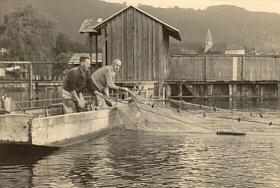 Netzfischen am Traunsee